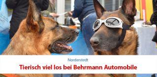 Tierisch viel los bei Behrmann Automobile!
